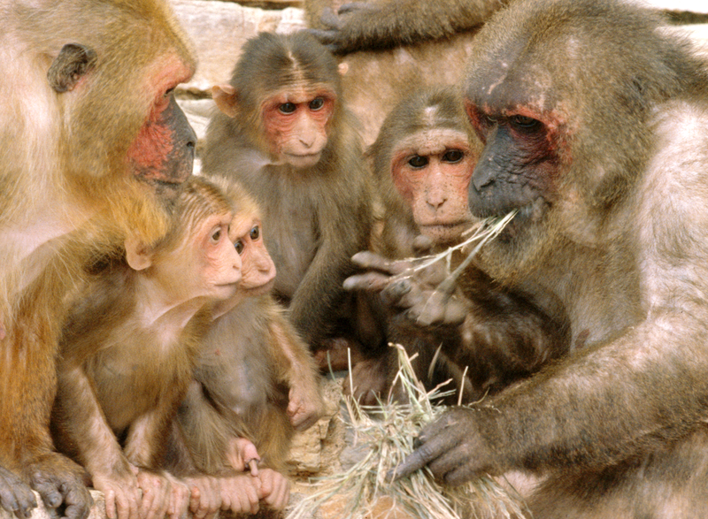 Macaque apprentissage
