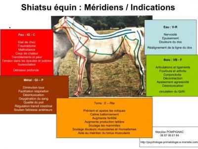 Meridiens symptomes cheval